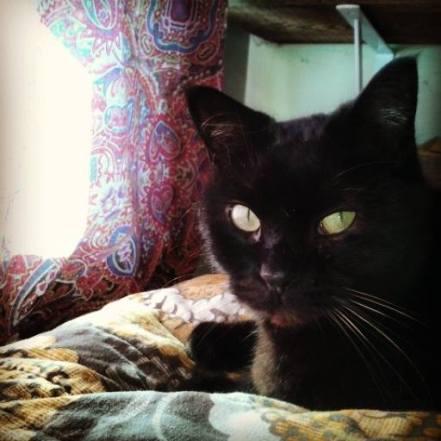 Blog- Ettie