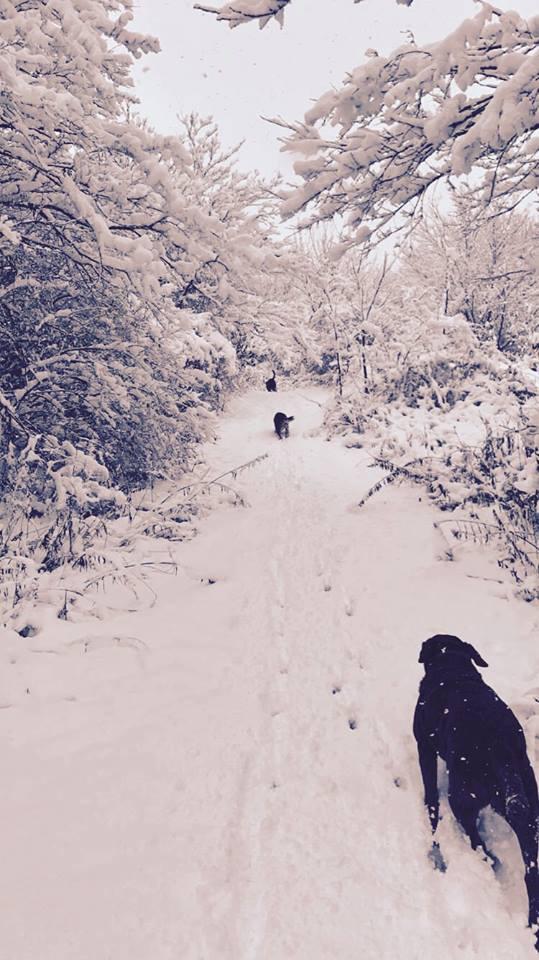 snow1 2016