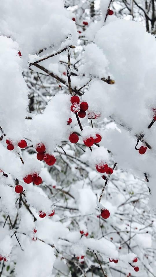 snow3 2016