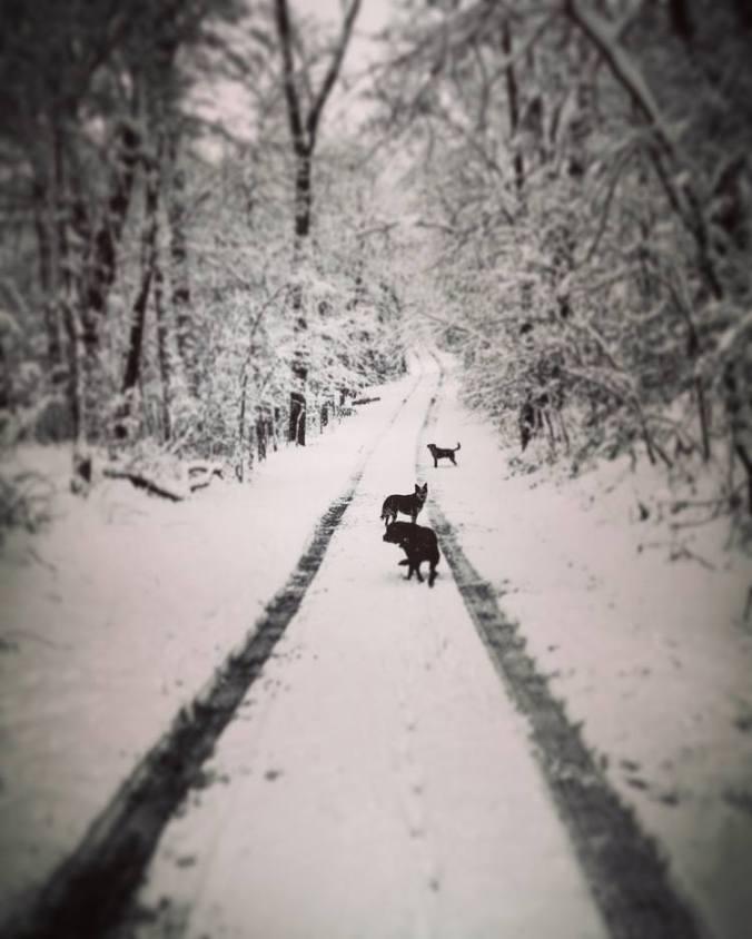 snow4 2016